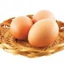 Куры станут нести яйца для Израиля