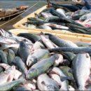 В Украине начнут сертифицировать происхождение рыбы