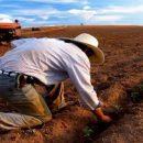 Поддержку украинских фермеров хотят увеличить