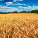 Турция заменит российское зерно украинским, но лишь частично