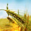 Украинские аграрии получили государственные дотации