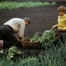 В Госгеокадастре рассказали, что включит в себя земельная реформа
