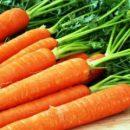Назвали причины, почему не дешевеет морковь