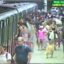 Жуткие кадры: в Риме женщину зажало в поезде метро и протащило по станции
