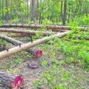 В Киеве вырубили лес размером с Троещину
