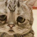Сеть покоряет очень печальный котенок