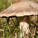 На Прикарпатье за сутки грибами отравились девять человек