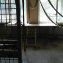 В Харьковской области обезьяны растерзали сотрудника зоопарка