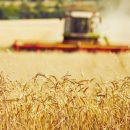 Украина теперь экспортирует зерно в ЕС без пошлин