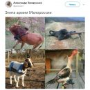 В сети смешными фото жестко высмеяли боевиков ДНР-ЛНР