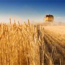 Нидерланды больше всех покупают украинскую агропродукцию
