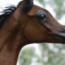 Выведен новый вид лошади, похожей на героя диснеевского мультика