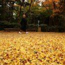Минэкологии просит не сжигать опавшие листья