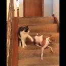 Взбесившийся пес от удара кошачьей лапой по морде развеселил Сеть