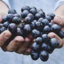 Медики: стареющий организм возможно омолодить ресвератролом