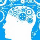 Чем мозг умного человека отличается от мозга посредственных людей?