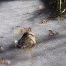 Из-за аномального холода в Америке посреди пруда замерзли аллигаторы