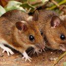 В Казахстане мыши съели в банкомате приличную сумму денег (видео)