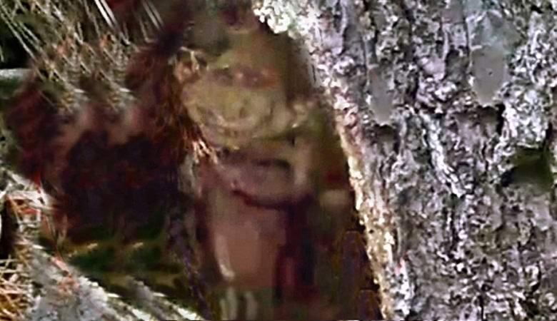 Американец сфотографировал гнома в дупле дерева