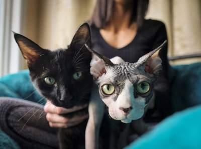 Маркетинговый ход: девушке продали побритого кота по цене сфинкса