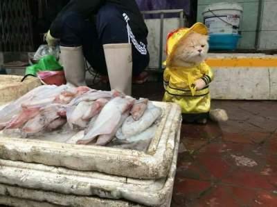 Сеть в восторге от кота, продающего рыбу
