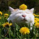 Майские праздники: сколько дней будут отдыхать украинцы
