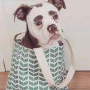 Самая грустная собака Германии имеет тысячи фанатов