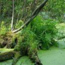 В Украине нашли озеро без дна