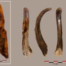 Ученые обнаружили захватывающие инструменты, которым 90 тысяч лет