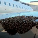 Пчелы сорвали авиарейс из Москвы в оккупированный Крым