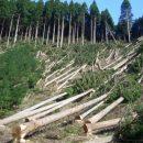 На восстановление карпатских лесов нужно 100 лет