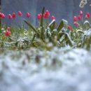 На выходных Украину ожидают заморозки