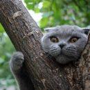 В Беларуси коммунальщики 5 дней решали, кто будет снимать кота с дерева