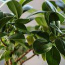 Названы лучшие комнатные растения, которые очищают воздух