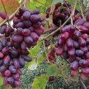 Сенсационное открытие: ученые назвали ягоду, спасающую от рака