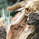 На школьников в Черкассах упало дерево