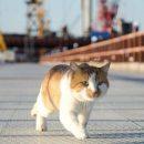 Крымский мост первым испытал не Путин, а кот: забавные фото