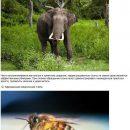 25 животных, которые могут запросто убить человека