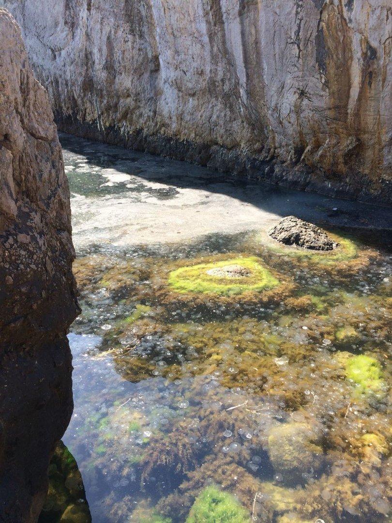 В Крыму массово отравились дети после моря: показали фото пляжа