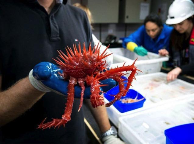 Из океана вытащили страшных и неизвестных животных: невиданные фото
