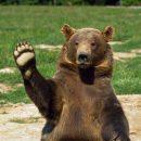 В США семейство медведей «оккупировало» автомобиль