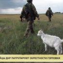 В сети одним фото высмеяли всех боевиков ДНР