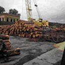 Украинский лес незаконно рубят и вывозят в Азию