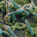 Зафиксирована новая смерть от опасной инфекции