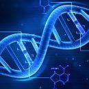 Ученые заявили о реальной возможности менять ДНК человека