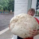 Весом с 5-летнего ребенка: на Киевщине нашли гигантский гриб