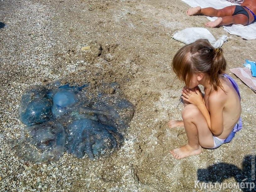 Огромные медузы замучили туристов в Одессе: фото пугающих созданий