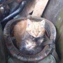 Показали котов, которые приходят к военным на передовую