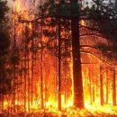 «Последний круг ада»: в Крыму вспыхнул масштабный пожар (видео)