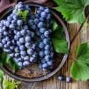 Медики назвали эффективную ягоду для укрепления костей